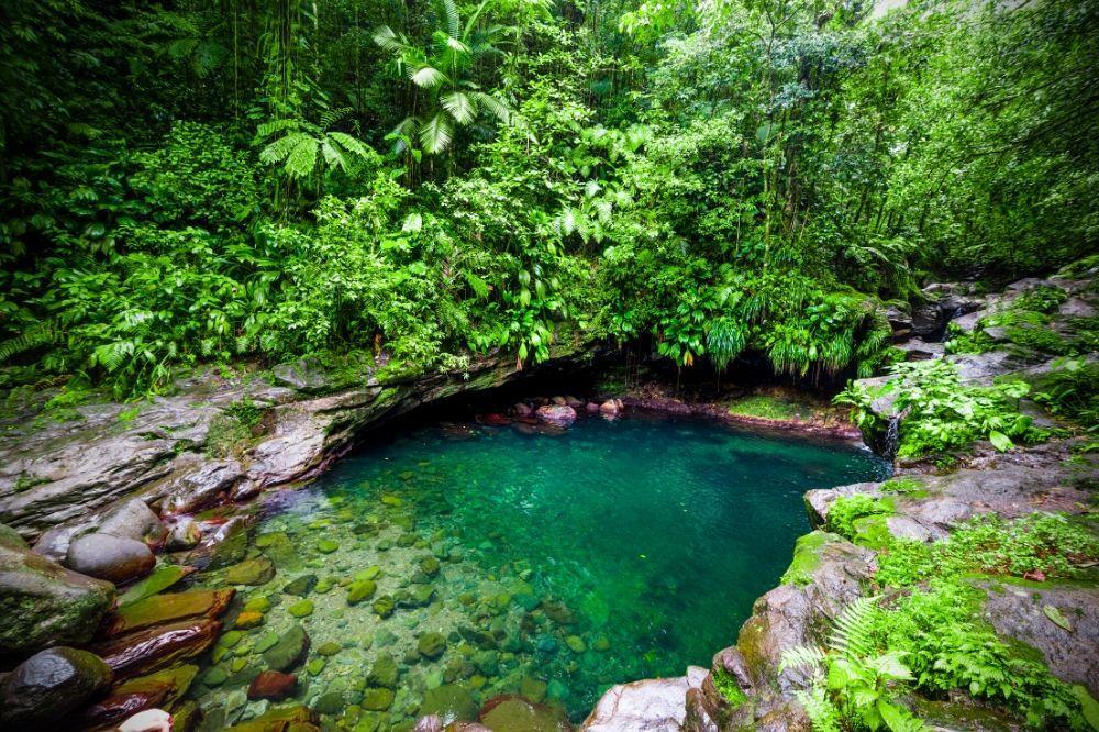 Gwadelupa-6-Bassine-Paradise